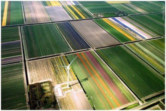 c0rdMvYFF1g 550x367 Цветущие поля Нидерландов