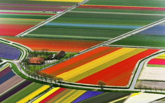polya tulpanov gollandiya 1920x1200 550x344 Цветущие поля Нидерландов