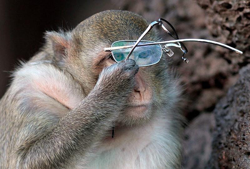 Обезьянки и очки картинки