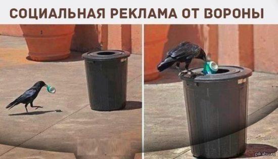 PZBrDFNOEaA 550x314 Экологическая социальная реклама от ВОРОНЫ