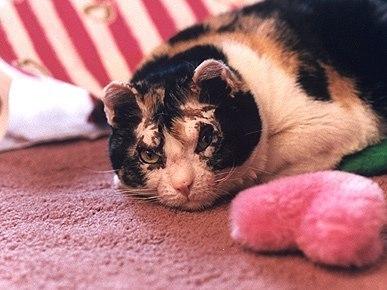 NrZxwXAha3Q Кошка героиня по имени Скарлет