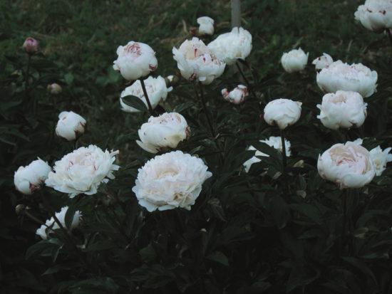 0 b407a ab052f87 orig 550x413 Весна от Фёдора Денисенко