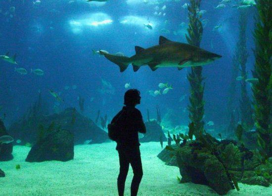 wall3 550x396 Самый большой  Природный аквариум в мире!