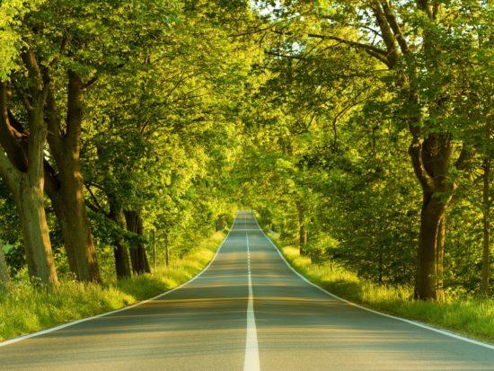 zelenaya doroga 550x413 Мир твоей собственной дороги