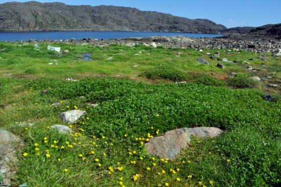 PS 12 07 22 353corrected  550x365 Растения подушки   убежище крохотным горным мирам