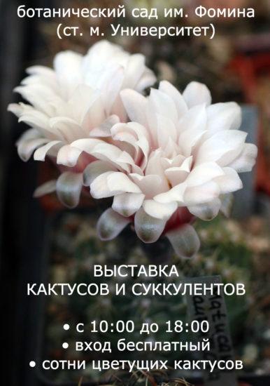 vystavka  386x550 Выставка кактусов