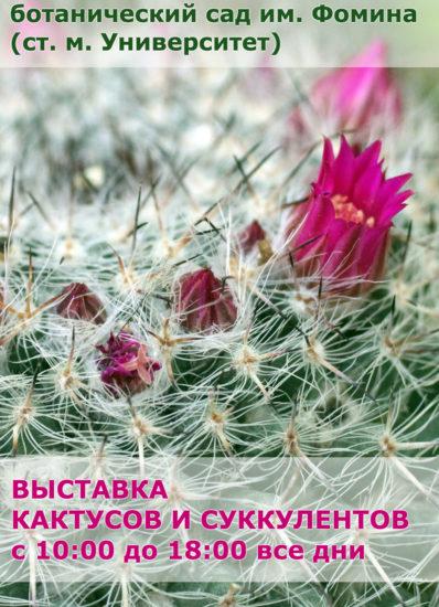 vystavka1  398x550 Выставка кактусов