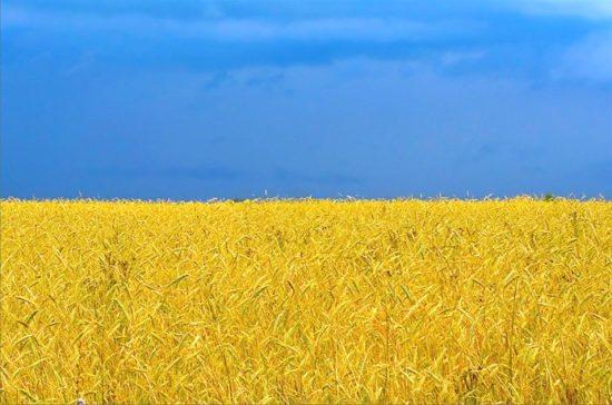 1205280885 1009 550x364 День Государственного флага Украины