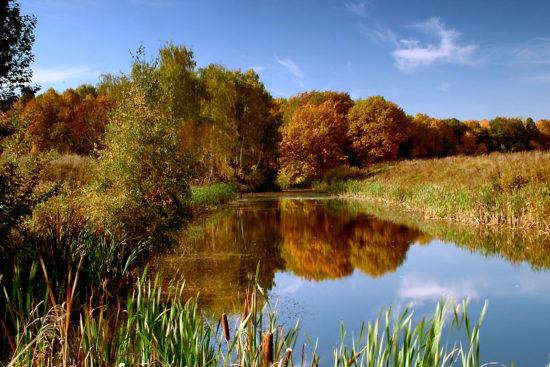 3 550x367 Осень в стихах
