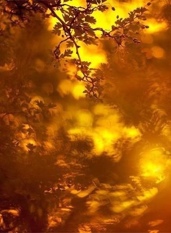 image2 Осень в стихах