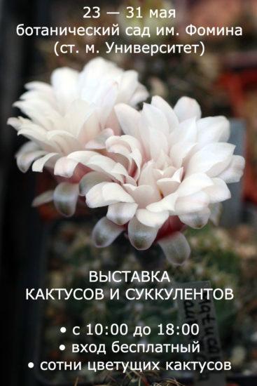 vystavka 367x550 Выставка кактусов