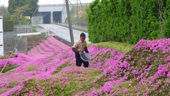 6845858 original 550x310 Несколько тысяч цветов ради жены