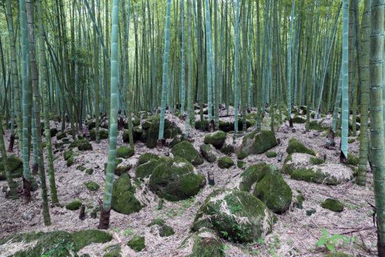 bambuk 550x367 Тайвань во всей своей красе. Часть 1