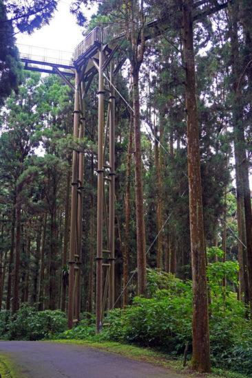 kedrovye lesa 366x550 Тайвань во всей своей красе. Часть 1