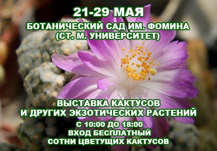 21 29 cactus430x Майская выставка кактусов и других экзотических растений