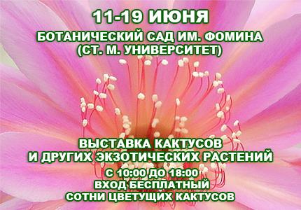11 19 Выставка кактусов