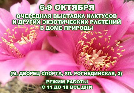 6 9 11cactus Октябрьская выставка кактусов