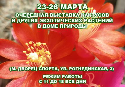 23 26 Весенняя выставка кактусов в Доме природы 2017