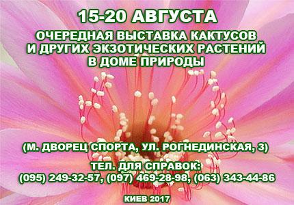 15 20 08 Выставка кактусов 15 20 августа