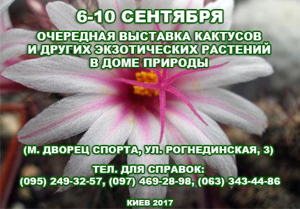 6 10 09 Выставка кактусов 6 10 сентября