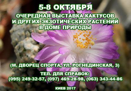 5 8 10 2017 Выставка кактусов 5 8 октября 2017