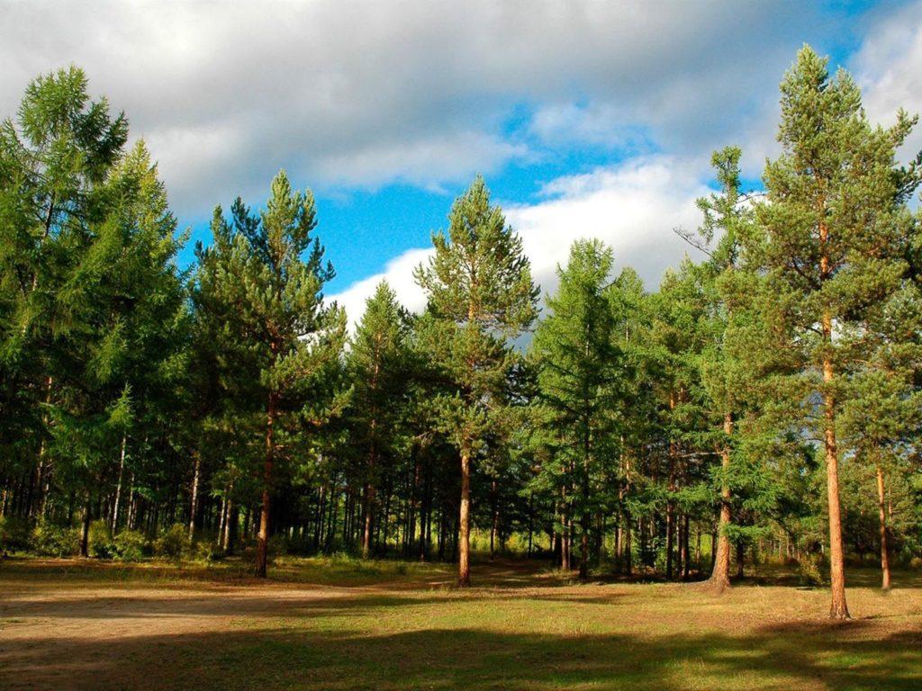 Лес  фото обои на рабочий стол картинки с лесом  Страница 7