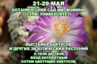 21-29-cactus430x
