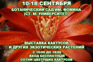 10-18-09cactus